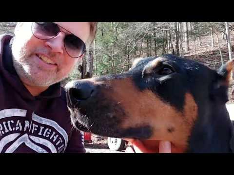 Doberman Pinscher Vlog - Extreme weather - mindless rambling