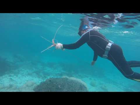 Spearfishing - The Reefs of Palau