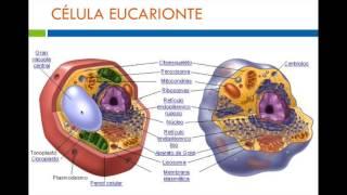 Biología celular básica