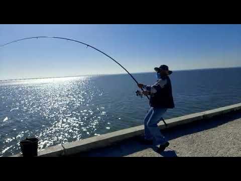Pesca de Corvina