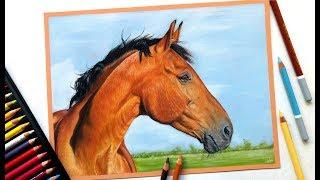 Drawing a realistic horse portrait with pastel pencils!   Leontine van vliet