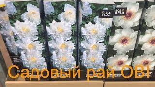 САДОВЫЙ РАЙ ОБИ! Посадочный материал:гладиолусы, лилии, георгины, пионы,розы.