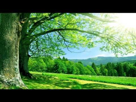 1 HOUR Healing Meditation Music - SOUND THERAPY - RELAX MIND AND BODY - Incredibly Soothing...