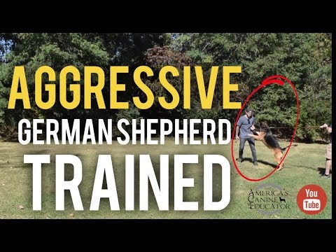 Aggressive German Shepherd Training- Breaking through fear aggression with America's Canine Educator