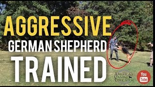 Aggressive German Shepherd Training Breaking through fear aggression Titan Ep1