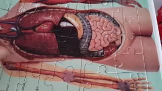 İç organlar puzzle :)