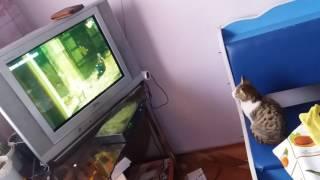 Кот смотрит фильм Хатико.