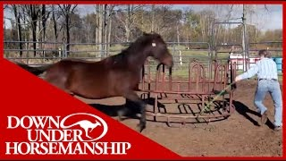 Download Clinton Anderson Presents Running Scared: Training An Aggressive Horse Mp3 and Videos