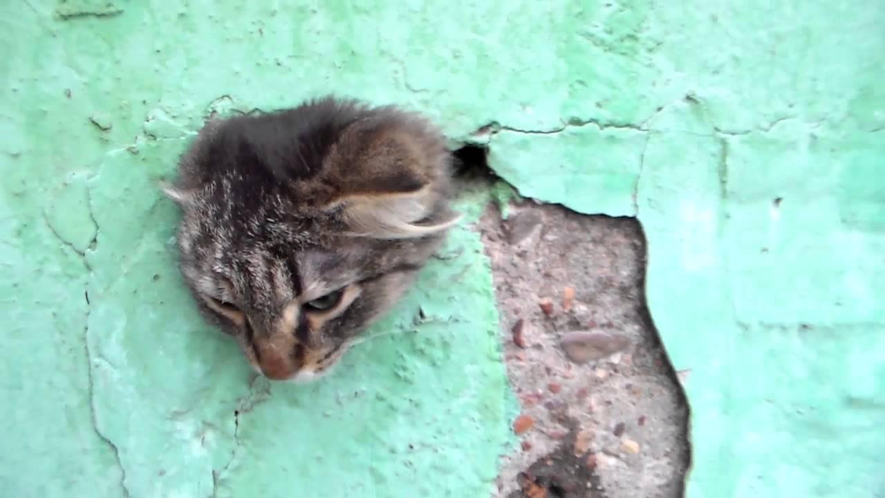 6 фев 2014. Http://kotenokvdome. Ru настал тот момент, когда и в моем доме возникла острая необходимость установить дверь для кошки, и я смог на собственном опыте убедить.