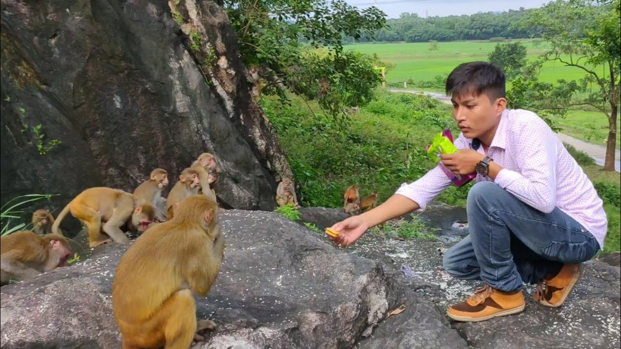 Monkey Hungry For Foods