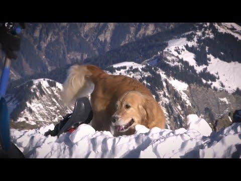 كلاب البحث في سويسرا تستعد لموسم الانهيار الجليدي