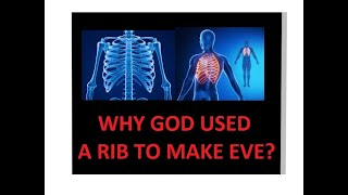 Why Did God Use A Rib To Make Eve The regenerating regrowing amazing rib bone marrow stem cells DNA