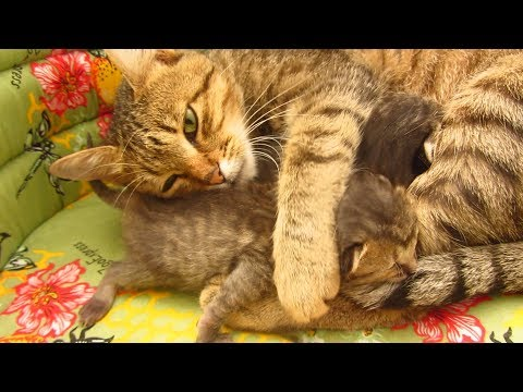 Mother cat with kittens the third day in the apartment