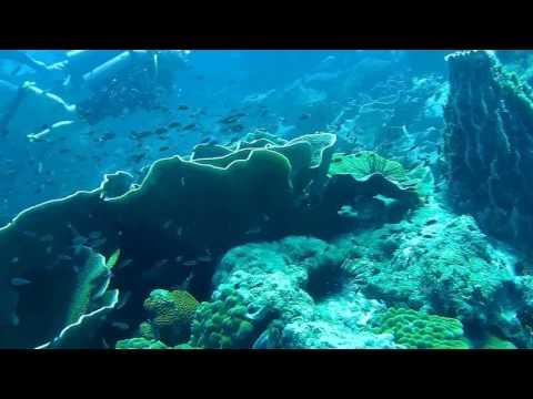 Thailand Koh Chang 2017 Dive 3
