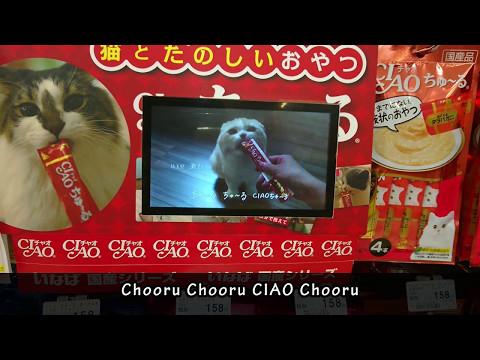 Japanese Cat Treats Commercial Song (w/lyrics)