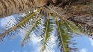 От Кубы Море, Путешествие по Карибскому Морю Роллинг | морские круизы кругосветные путешествия