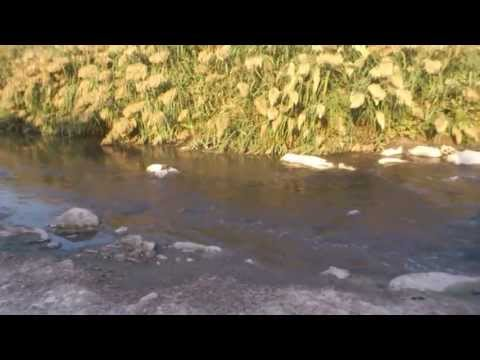 Beirut river crocodile
