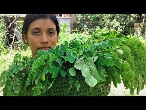 Healthy Food Drumstick Leaves Recipe   Village Style Cooking By Street Village Food