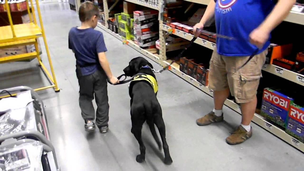 On Command Canine Training Center Autism Service Dog Training Youtube