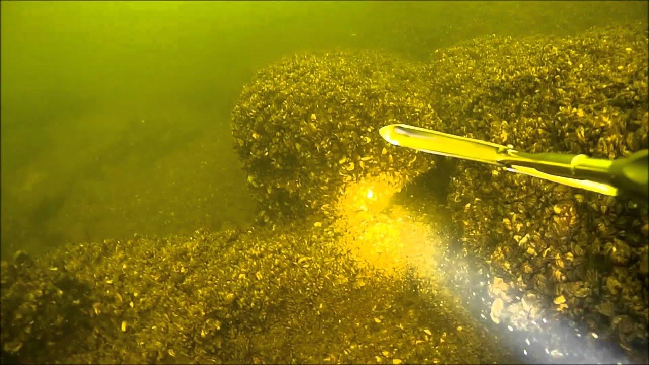 Подводная охота на трофейного судака 2016. spearfishing for walleye