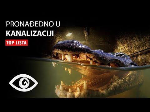 TOP 10: Najcudnije Stvari Pronadjene u Kanalizaciji