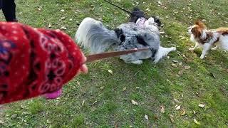 パピーの頃から遊び相手は小型犬が多かったまあやん、ムービーは親友の...