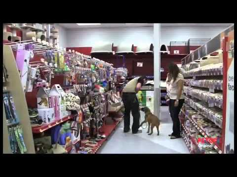 petco-dog-training-class-overview