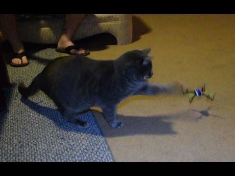 Cats vs. drones