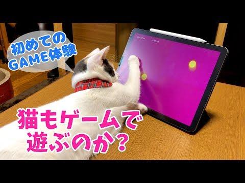猫もゲームに夢中?ぽてとと一緒にipad版猫用ゲームをやってみた