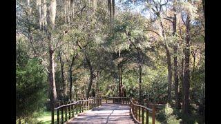 Jacksonville FL Arboretum