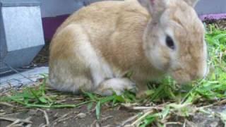 Crispin & vicuña (conejitos) c(=