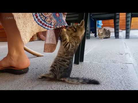 Funny Kittens Playing 😍🐶Cute and Funny Kittens Playing (Part 1) [Funny Pets]