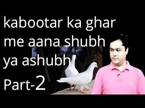kabootar ka ghar me aana shubh ya ashubh part2घर में अगर कबूतर का घोंसला है तो क्या हो सकता है part2