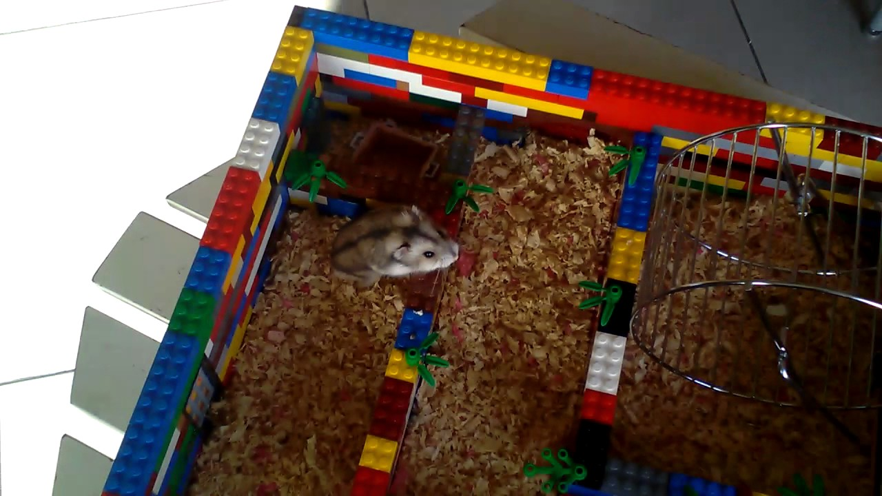 mon hamster nono et sa grande maison lego youtube. Black Bedroom Furniture Sets. Home Design Ideas