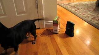 Good Life Dog Silencer Pro Stop Barking Product Review