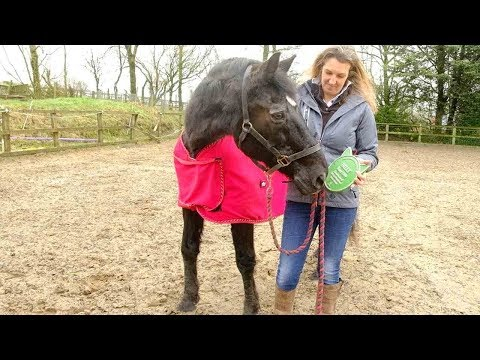 Meet The Last Horse Alive Who Played 'Black Beauty'