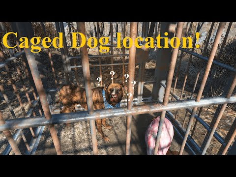 Teddy The  Caged Dog Location / Guide | Fallout 4