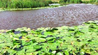 Ловля щуки в кувшинках рыбалка на воблеры Сплав по красивейшей реке Щука летом