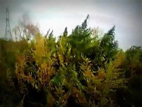 Чуйская долина видео конопли конопля листья внутрь