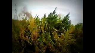 Чуйская долина Ирпеня