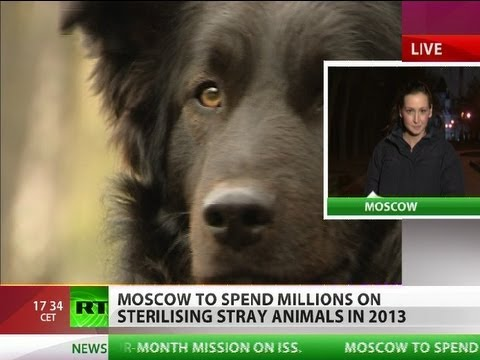 Moscow to spend millions on stray animals amid spate of dog killings