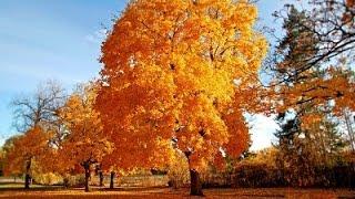 Осень - чудная пора!