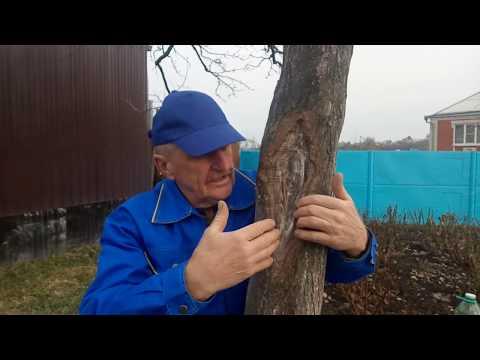 Кора деревьев.Лечение ран.Итоги.