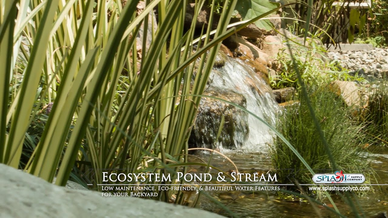 Ecosystem pond and waterfall designed by splash supply co for Pond supply companies
