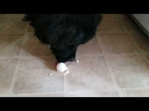 Kitchen tip: How to quickly clean up a dropped egg.