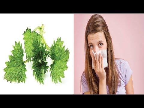 Butterbur BumbleBee - Hommel op bloemen Groot Hoefblad from YouTube · Duration:  49 seconds