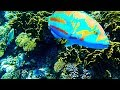 Underwater Wildlife at the coral reef, magical world in the Red Sea