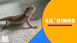 Lil Dinos