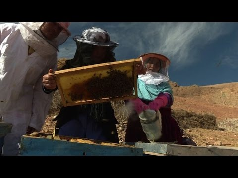 Queen bees: how honey co-ops help Afghan women take control