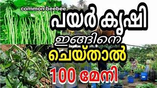 Cultivation of Cowpea payar krishi / പയർ കൃഷി കീട നിയന്ത്രണം